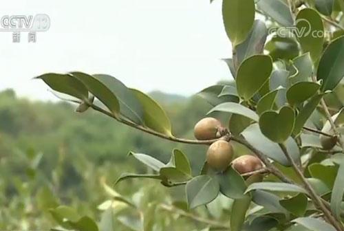 退耕还林还草工程实施20周年 开辟农民增收新渠道