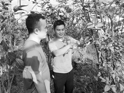 泉州农业科技星创天地科技特派员姚文(右)对农户进行金花茶病虫害防控技术指导 张鹏摄