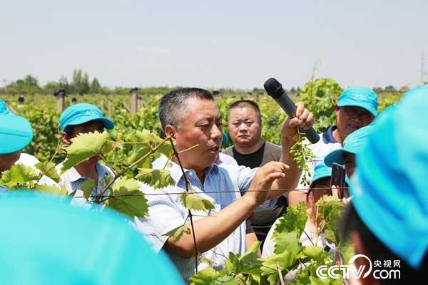 """""""西秦农人""""张宗勤:服务果农 让葡萄有小时候的味道"""