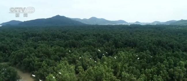 自然资源部推进自然资源调查监测体系建立