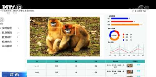 金丝猴的脸部识别率95.6%!我国初步完成了动物个体识别系统的开发