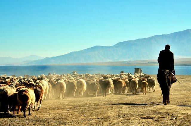 新疆牧民放牧。摄影/章轲