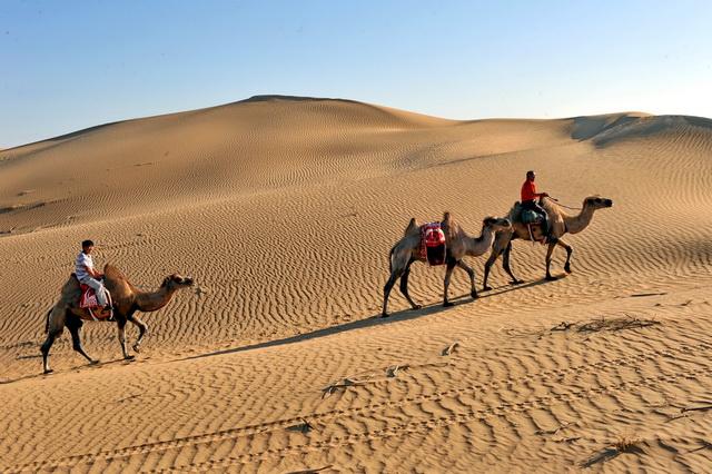 我国的沙漠化土地主要分布在北方干旱、半干旱和部分半湿润地区。摄影/章轲