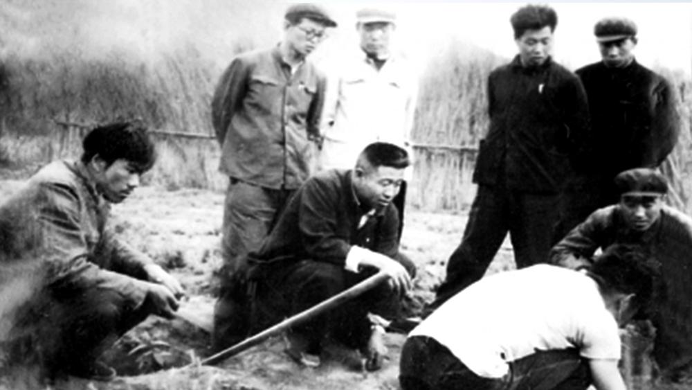 王尚海(左三)和职工一起研究造林技术问题。(资料图)