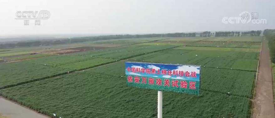摩登5首页【丰收节里看丰收】黑龙江依安:保护黑土地 打造绿色有机粮仓